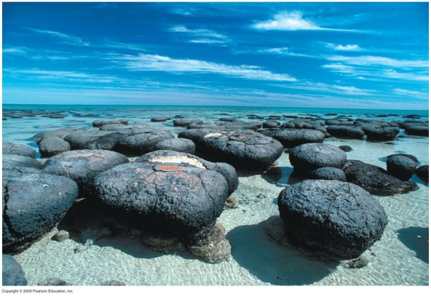 Stromatolites  are layered bio-chemical accretionary structures formed in shallow water by the trapping, binding and cementation of sedimentary grains by biofilms (microbial mats) of microorganisms, especially cyanobacteria.[1] Stromatolites provide ancient records of life on Earth by fossil remains which might date from more than 3.5 billion years ago.